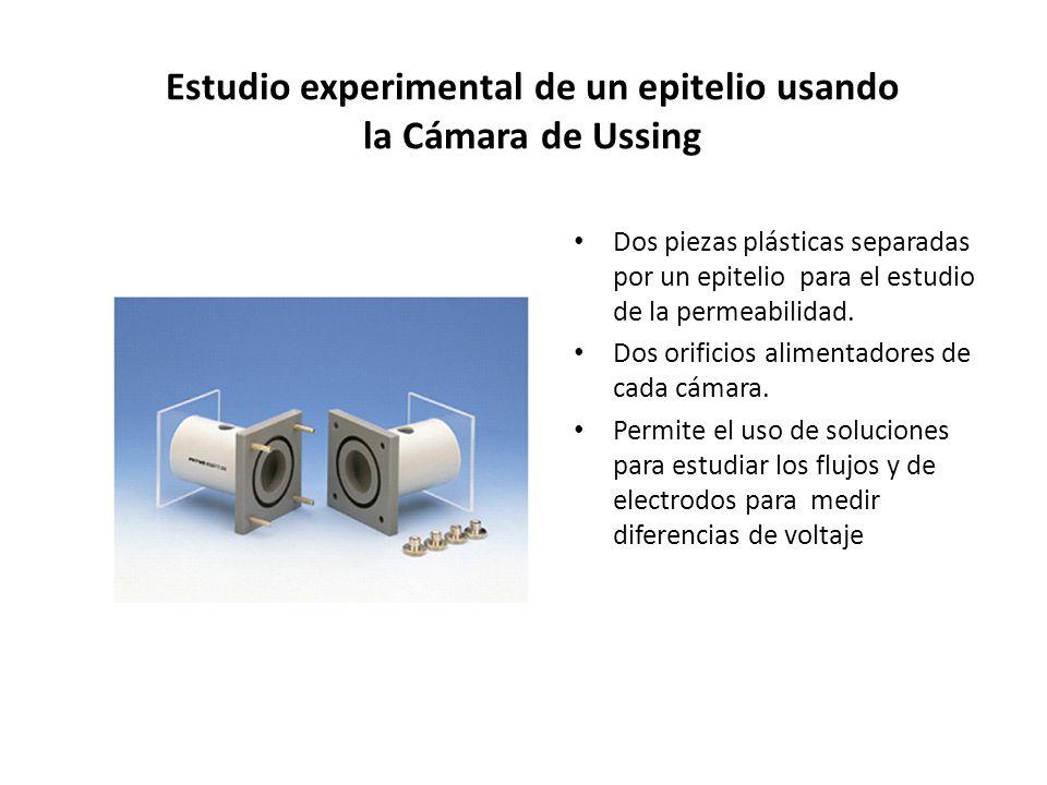 Estudio experimental de un epitelio usando la Cámara de Ussing Dos piezas plásticas separadas por un epitelio para el estudio de la permeabilidad. Dos