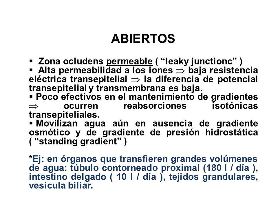 ABIERTOS Zona ocludens permeable ( leaky junctionc ) Alta permeabilidad a los iones baja resistencia eléctrica transepitelial la diferencia de potenci