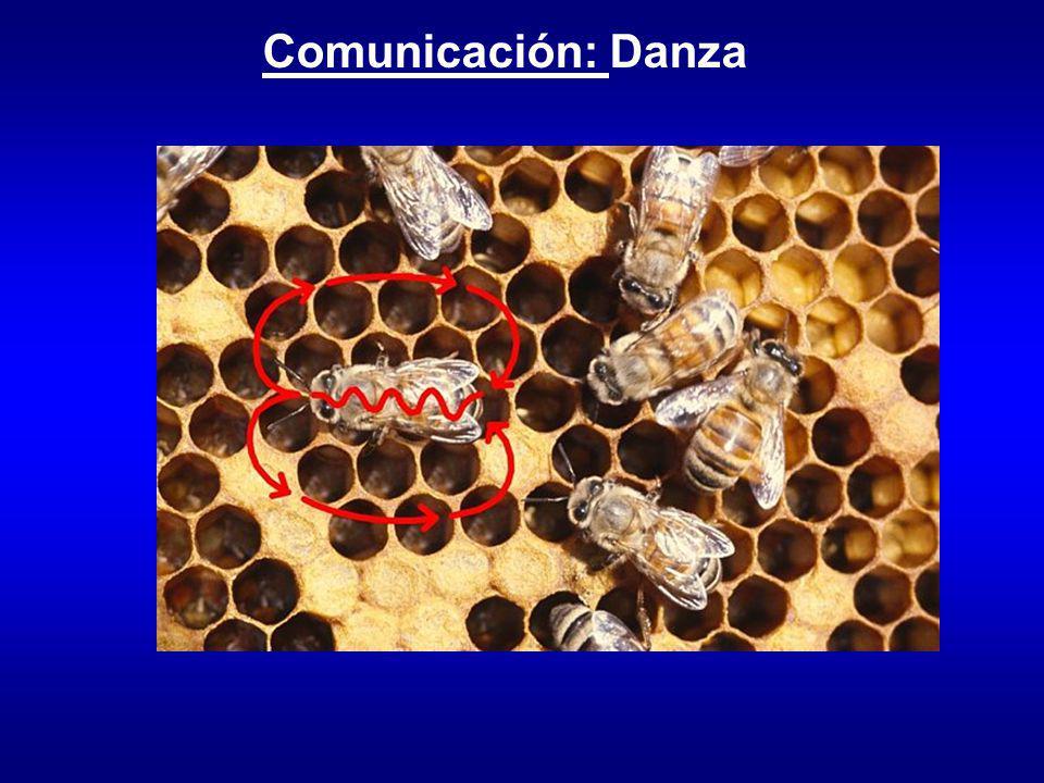 Comunicación: Danza
