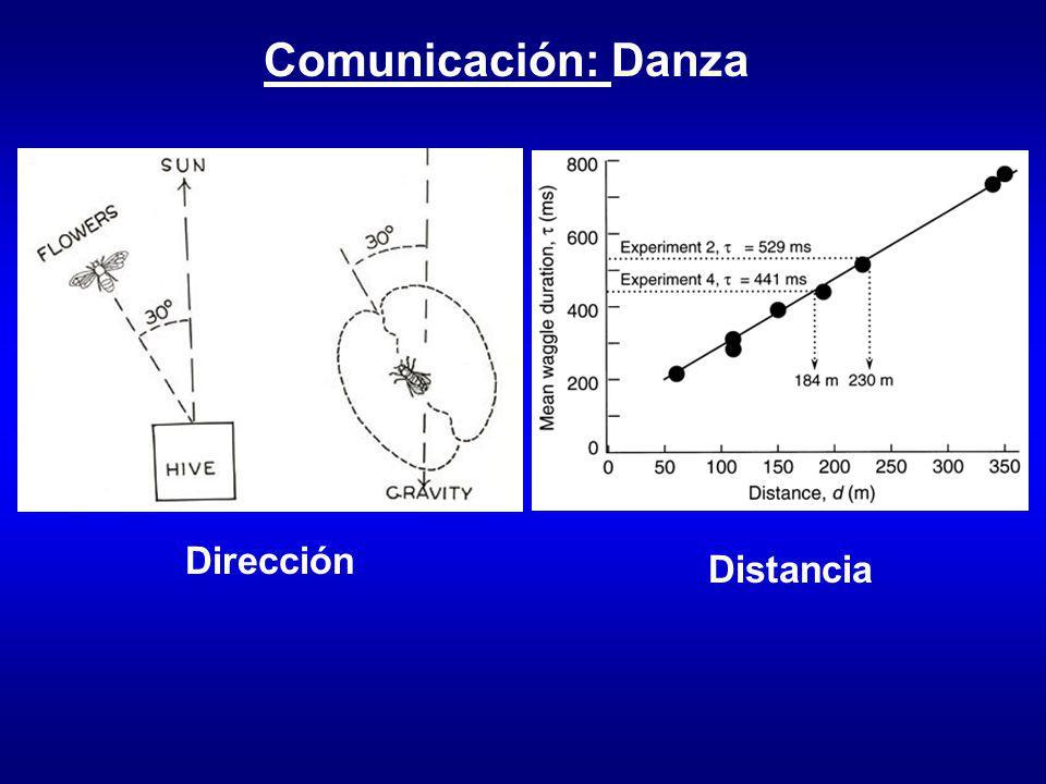 Comunicación: Danza Dirección Distancia