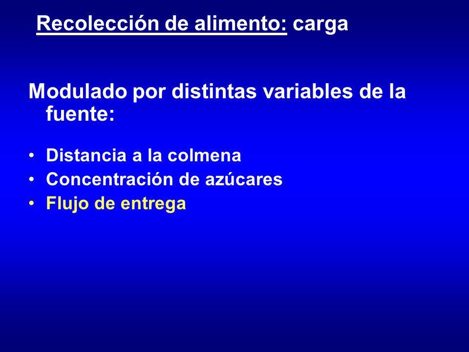 Recolección de alimento: carga Modulado por distintas variables de la fuente: Distancia a la colmena Concentración de azúcares Flujo de entrega