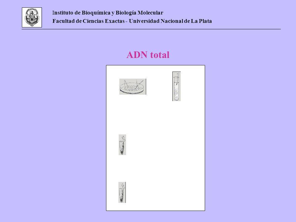 Instituto de Bioquímica y Biología Molecular Facultad de Ciencias Exactas - Universidad Nacional de La Plata ADN total