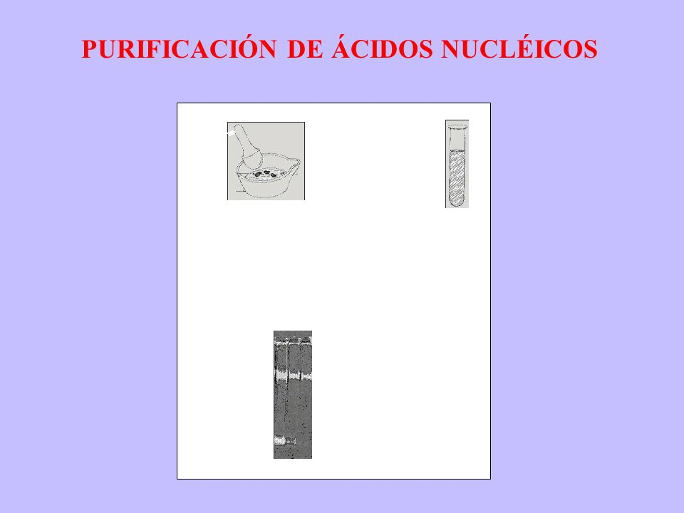 PURIFICACIÓN DE ÁCIDOS NUCLÉICOS