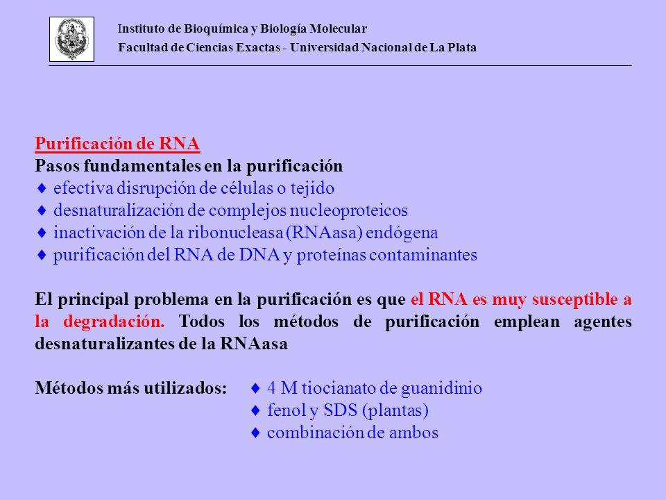 Instituto de Bioquímica y Biología Molecular Facultad de Ciencias Exactas - Universidad Nacional de La Plata Purificación de RNA Pasos fundamentales e