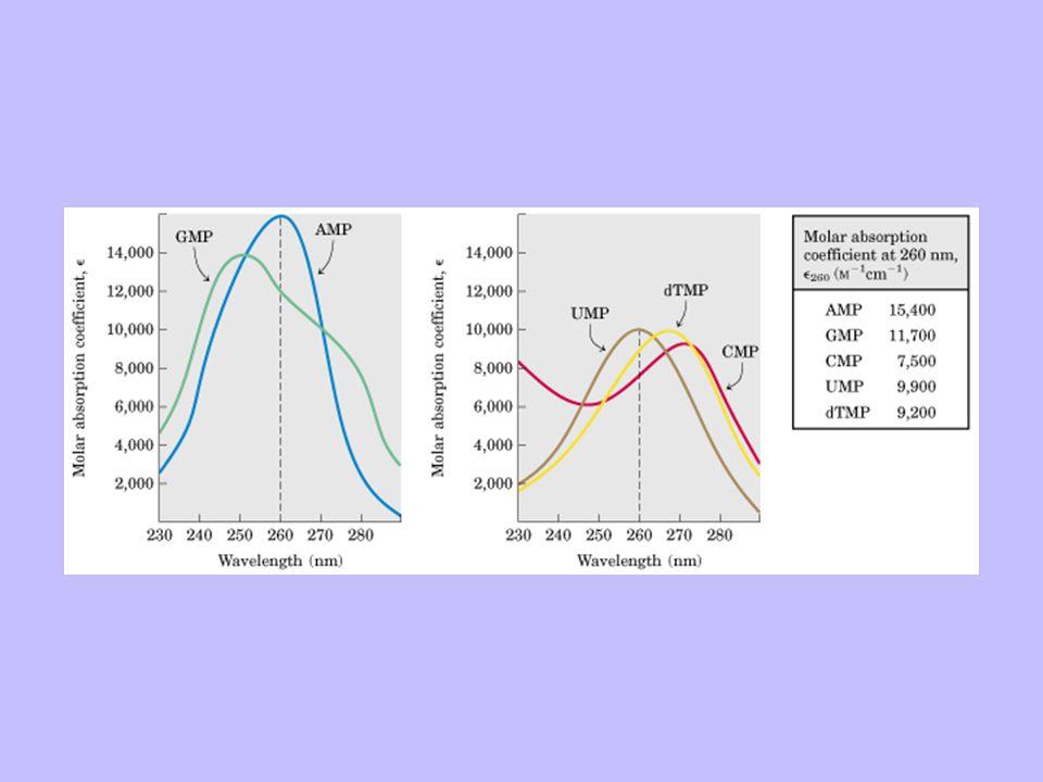 Instituto de Bioquímica y Biología Molecular Facultad de Ciencias Exactas - Universidad Nacional de La Plata Sondas Marcadas radioctivamente Marcadas no radioctivamente ( Digoxigenina, avidina) Se pueden obtener por: Sintesis química Extensión usando usando primers al azar PCR