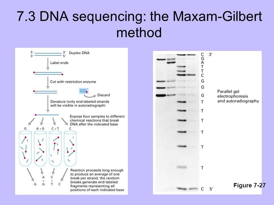 7.3 DNA sequencing: the Maxam-Gilbert method Figure 7-27