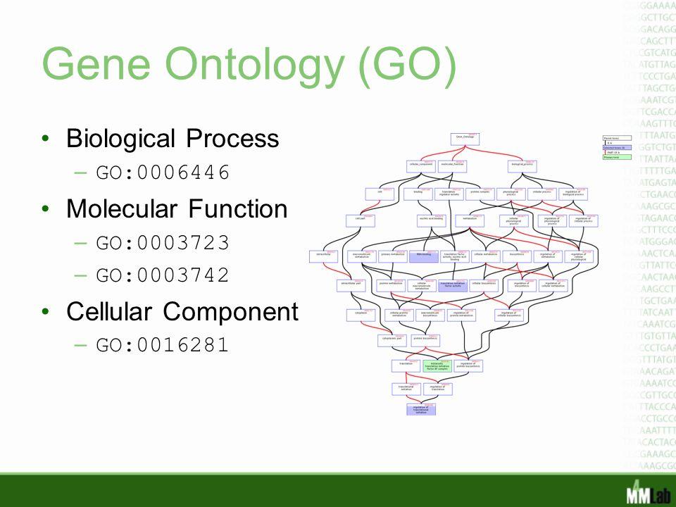 Gene Ontology (GO) Biological Process – GO:0006446 Molecular Function – GO:0003723 – GO:0003742 Cellular Component – GO:0016281
