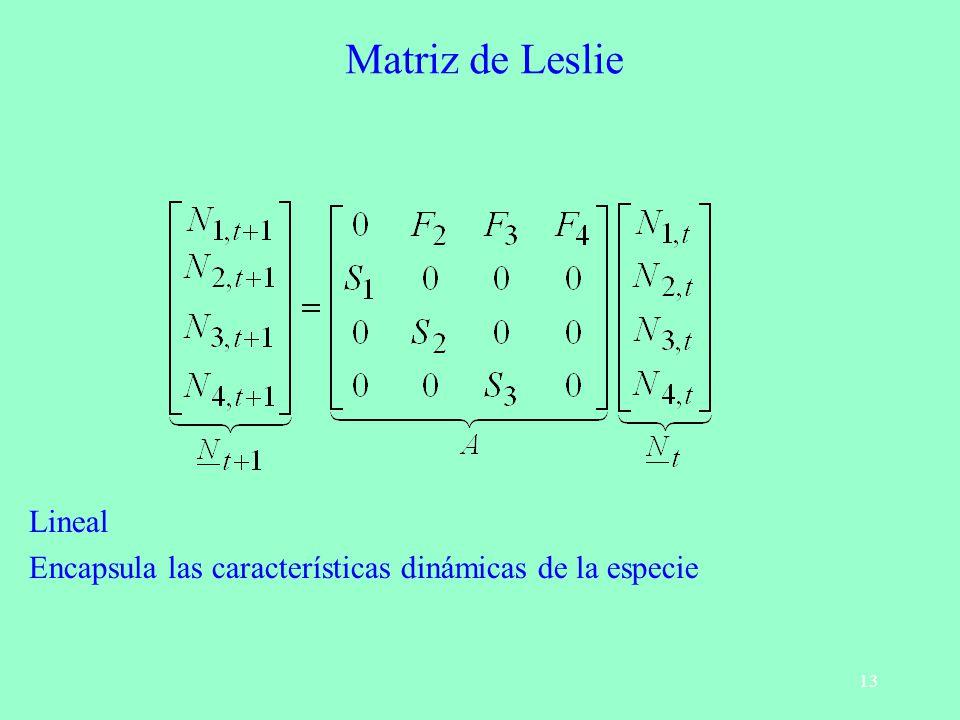 13 Matriz de Leslie Lineal Encapsula las características dinámicas de la especie