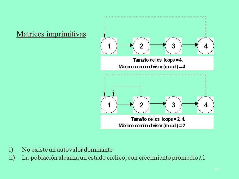 19 Matrices imprimitivas i)No existe un autovalor dominante ii)La población alcanza un estado cíclico, con crecimiento promedio λ1
