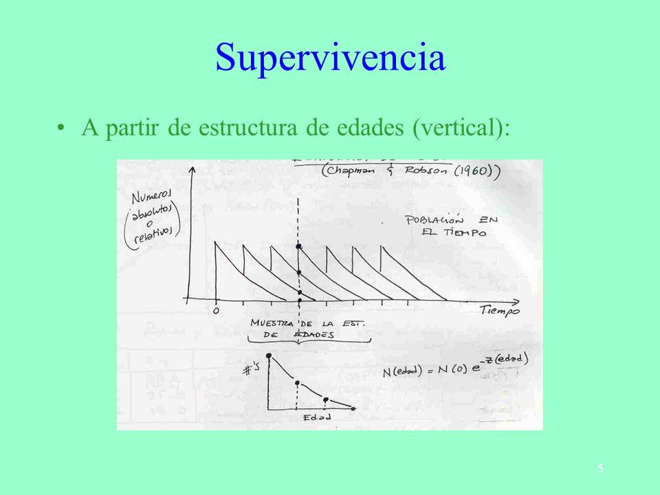 5 Supervivencia A partir de estructura de edades (vertical):