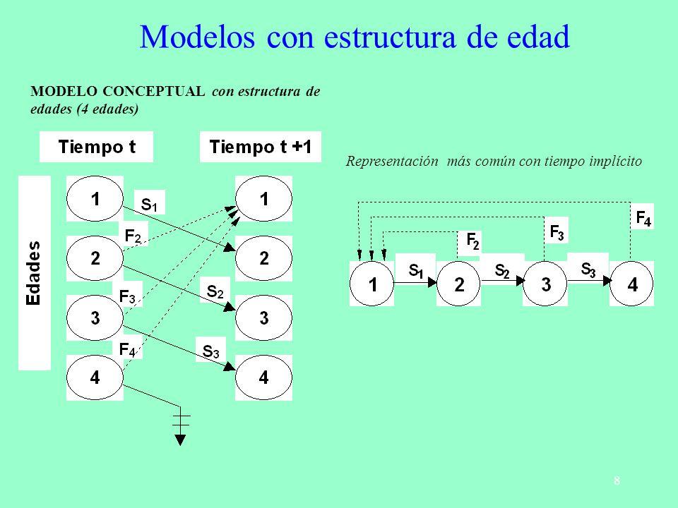 8 MODELO CONCEPTUAL con estructura de edades (4 edades) Representación más común con tiempo implícito Modelos con estructura de edad