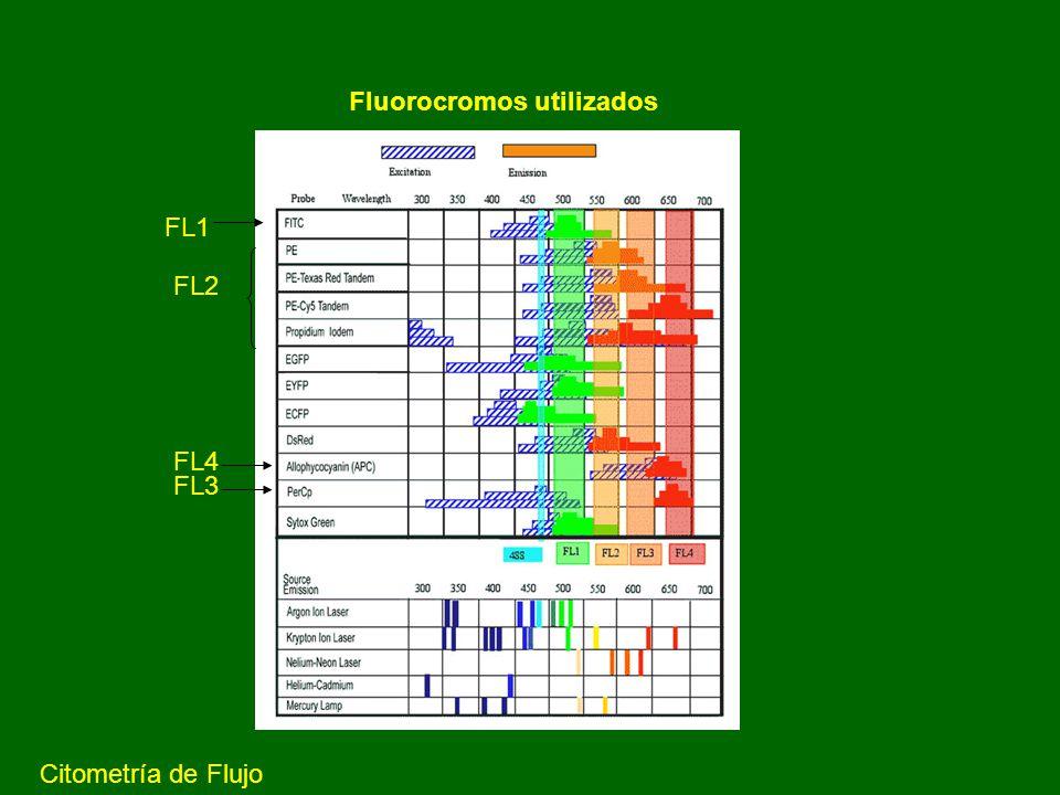 DETERMINACION DE APOPTOSIS MEDIANTE CITOMETRIA DE FLUJO TUNEL: Determina ADN fragmentado, incorporando a los extremos de ADN 12-dUTP-FITC
