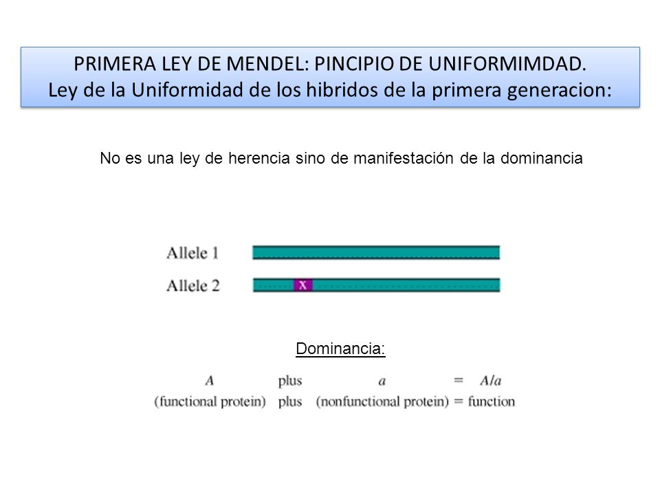 PRIMERA LEY DE MENDEL: PINCIPIO DE UNIFORMIMDAD.