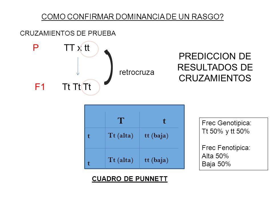 REGLAS DE PROBABILIDADES UTILIZADAS EN GENETICA REGLA DE LA MULTIPLICACION = y REGLA DE LA ADICION = o