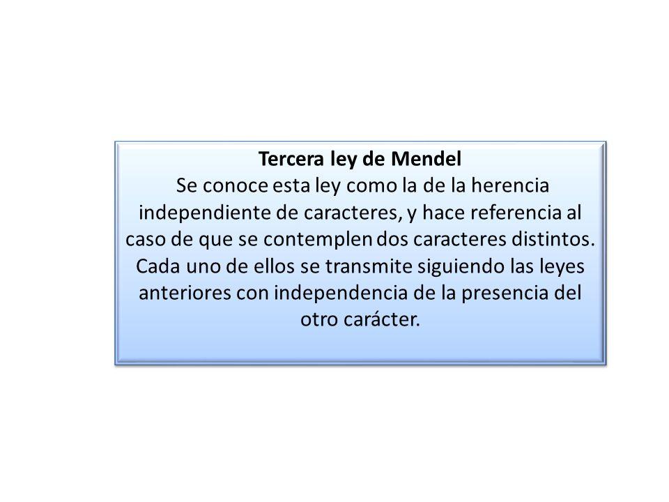 Tercera ley de Mendel Se conoce esta ley como la de la herencia independiente de caracteres, y hace referencia al caso de que se contemplen dos caracteres distintos.