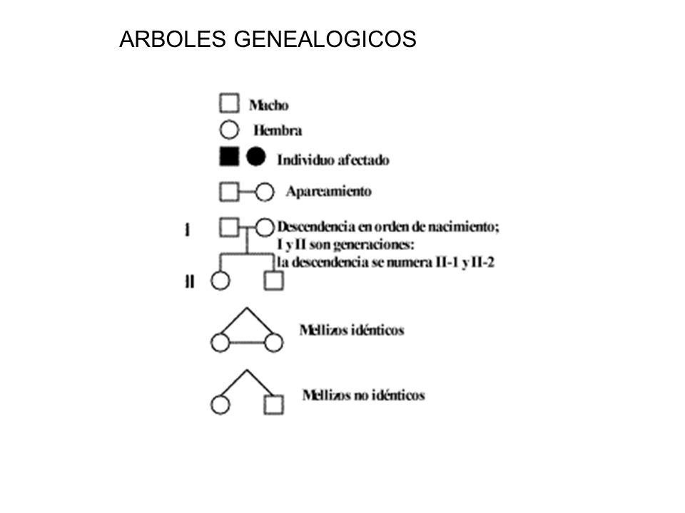 ARBOLES GENEALOGICOS