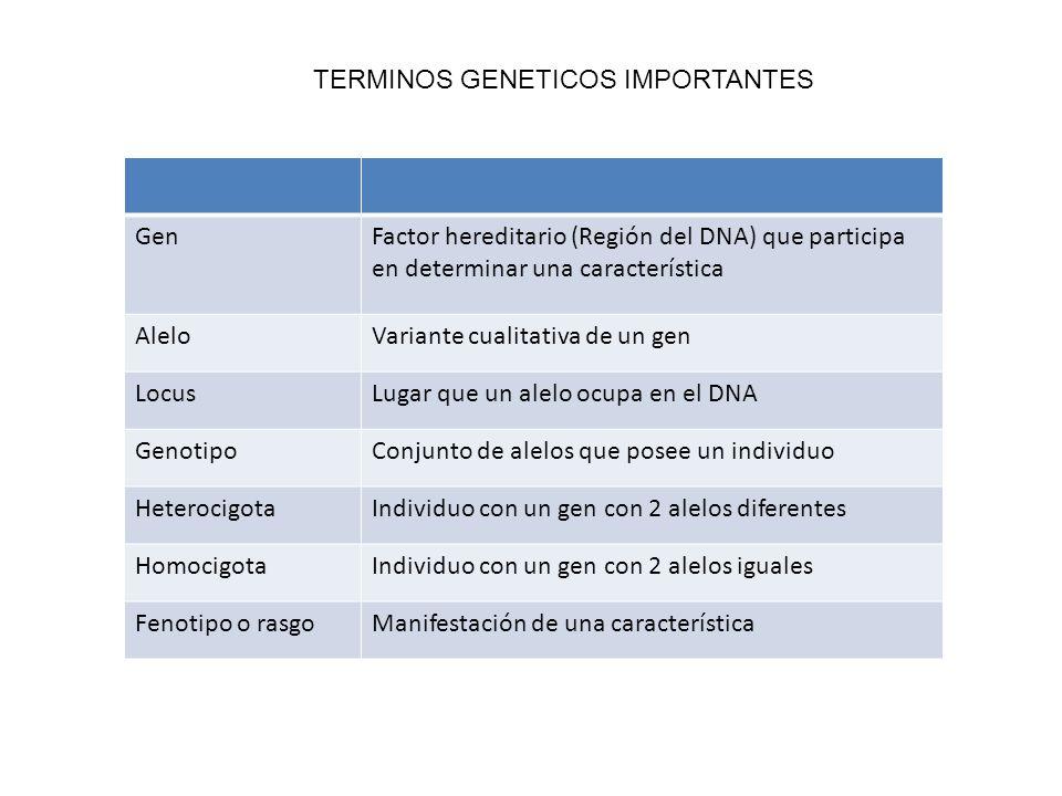 TERMINOS GENETICOS IMPORTANTES GenFactor hereditario (Región del DNA) que participa en determinar una característica AleloVariante cualitativa de un gen LocusLugar que un alelo ocupa en el DNA GenotipoConjunto de alelos que posee un individuo HeterocigotaIndividuo con un gen con 2 alelos diferentes HomocigotaIndividuo con un gen con 2 alelos iguales Fenotipo o rasgoManifestación de una característica