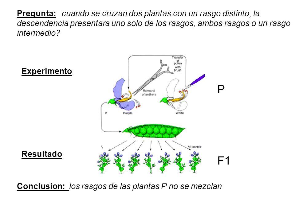 F1 Pregunta: cuando se cruzan dos plantas con un rasgo distinto, la descendencia presentara uno solo de los rasgos, ambos rasgos o un rasgo intermedio.