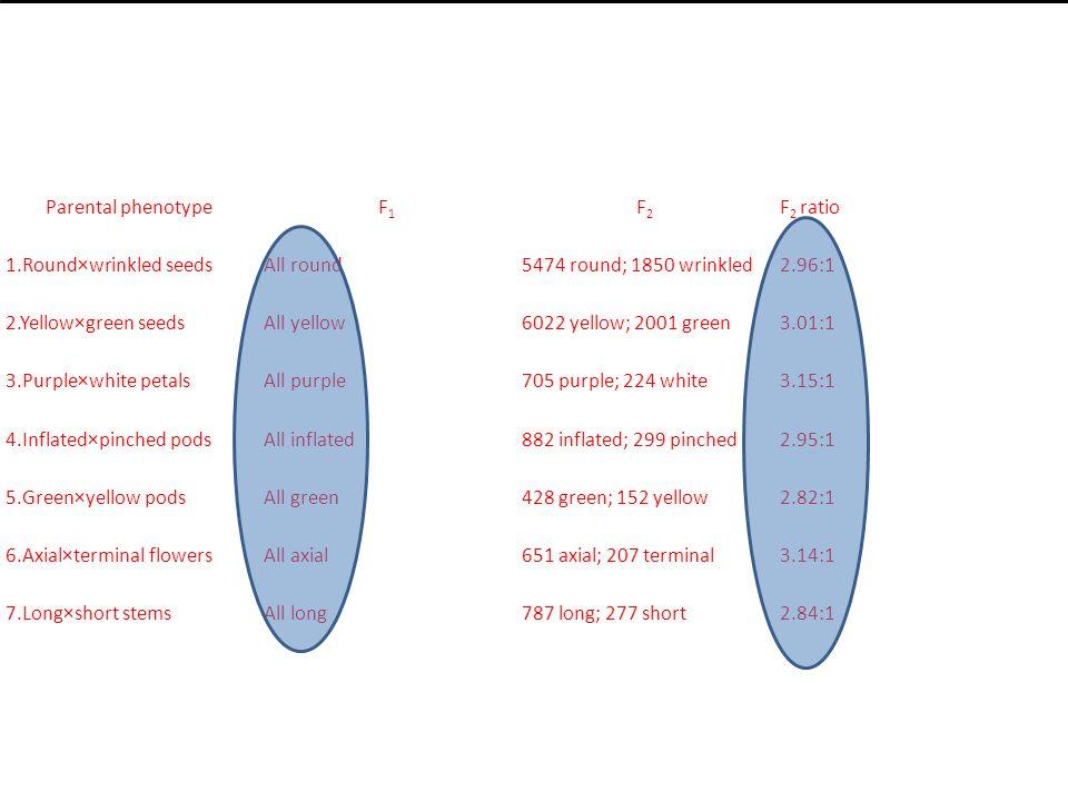 Parental phenotypeF1F1 F2F2 F 2 ratio 1.Round×wrinkled seedsAll round5474 round; 1850 wrinkled2.96:1 2.Yellow×green seedsAll yellow6022 yellow; 2001 green3.01:1 3.Purple×white petalsAll purple705 purple; 224 white3.15:1 4.Inflated×pinched podsAll inflated882 inflated; 299 pinched2.95:1 5.Green×yellow podsAll green428 green; 152 yellow2.82:1 6.Axial×terminal flowersAll axial651 axial; 207 terminal3.14:1 7.Long×short stemsAll long787 long; 277 short2.84:1