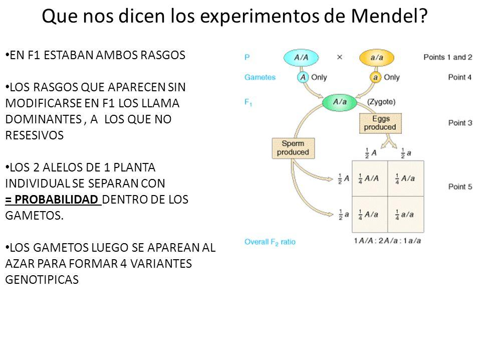 EN F1 ESTABAN AMBOS RASGOS LOS RASGOS QUE APARECEN SIN MODIFICARSE EN F1 LOS LLAMA DOMINANTES, A LOS QUE NO RESESIVOS LOS 2 ALELOS DE 1 PLANTA INDIVIDUAL SE SEPARAN CON = PROBABILIDAD DENTRO DE LOS GAMETOS.