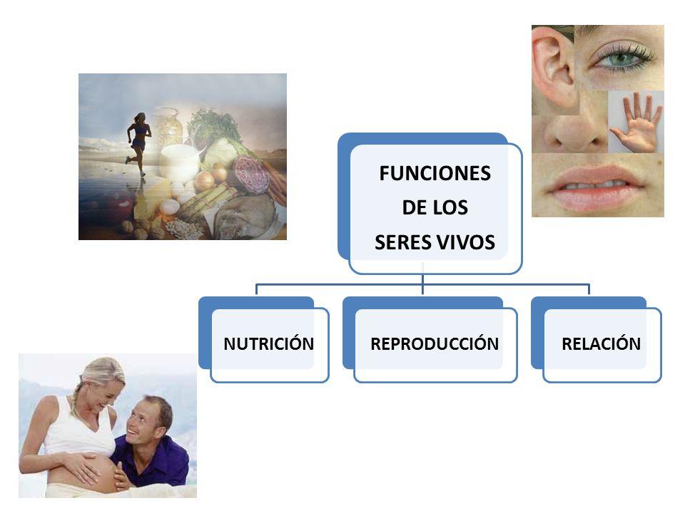 FUNCIONES DE LOS SERES VIVOS NUTRICIÓNREPRODUCCIÓNRELACIÓN