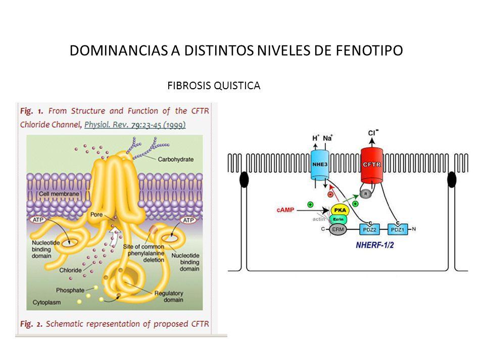 DOMINANCIAS A DISTINTOS NIVELES DE FENOTIPO FIBROSIS QUISTICA