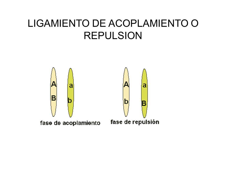 LIGAMIENTO DE ACOPLAMIENTO O REPULSION