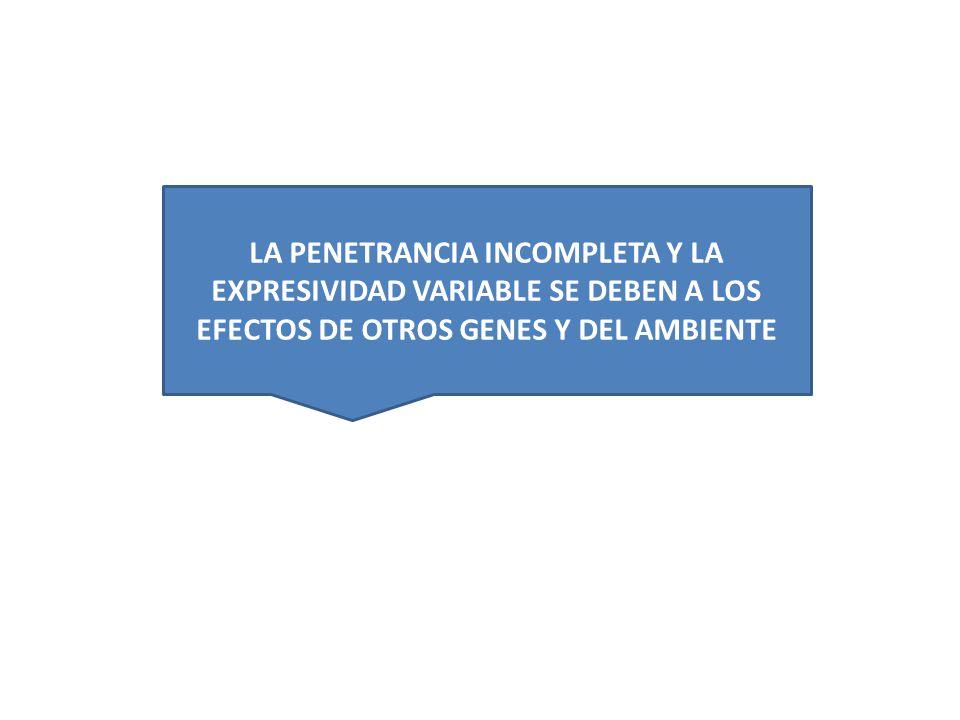 HIPOTESIS QUE EXPLICAN EL SEGUNDO EXPERIMENTO: 1-Los genotipos parentales cambiaron 2-N chico de F2 en segundo experimento 3-genes no actuan en el vacio, dependen del ambiente para presentar sus efectos FENOTIPO=GENOTIPO + AMBIENTE Los genes pueden actuar diferentemente en diferentes ambientes.