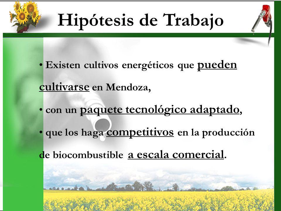 Objetivos General: Evaluar la factibilidad económica de los posibles cultivos aptos para la obtención de biocombustible y su impacto a nivel provincial Específicos: para colza, topinambur y girasol 1.