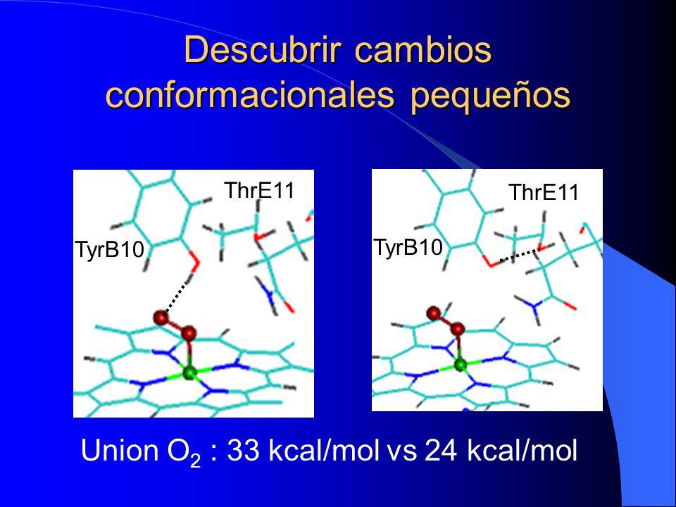 Descubrir cambios conformacionales pequeños Union O 2 : 33 kcal/mol vs 24 kcal/mol TyrB10 ThrE11 TyrB10 ThrE11