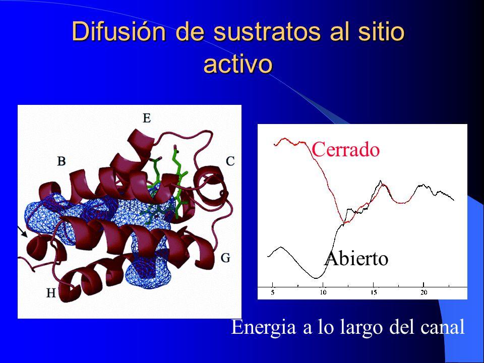 Difusión de sustratos al sitio activo Energia a lo largo del canal Cerrado Abierto