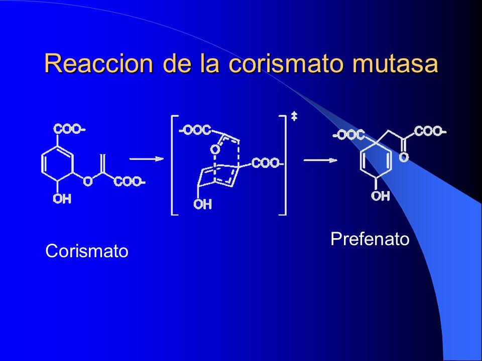 Reaccion de la corismato mutasa Corismato Prefenato