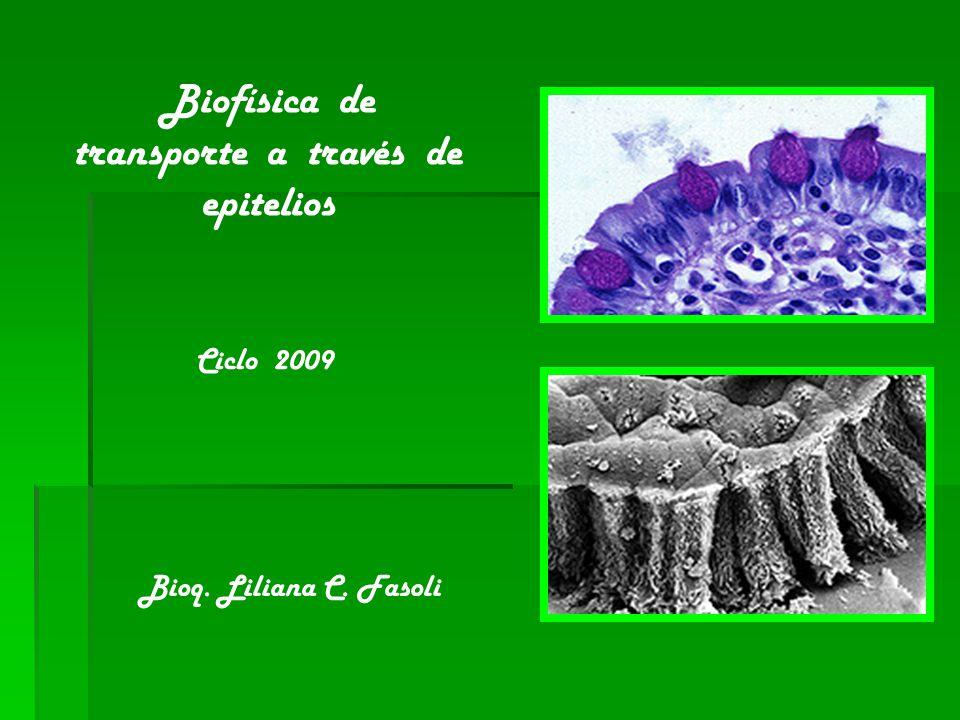 Biofísica de transporte a través de epitelios Ciclo 2009 Bioq. Liliana C. Fasoli