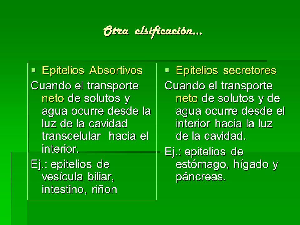 Algunos ejemplos de polaridad en los epitelios