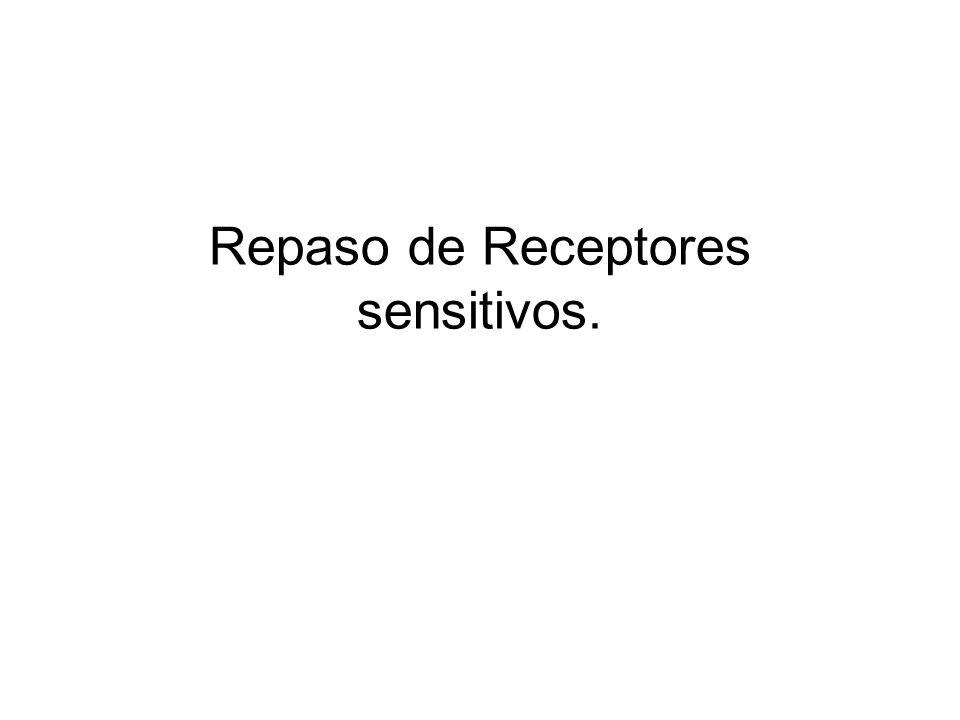 Receptores sensitivos Los receptores se pueden subdividir según la clase de estímulo que responden: 1.Mecanorreceptores.