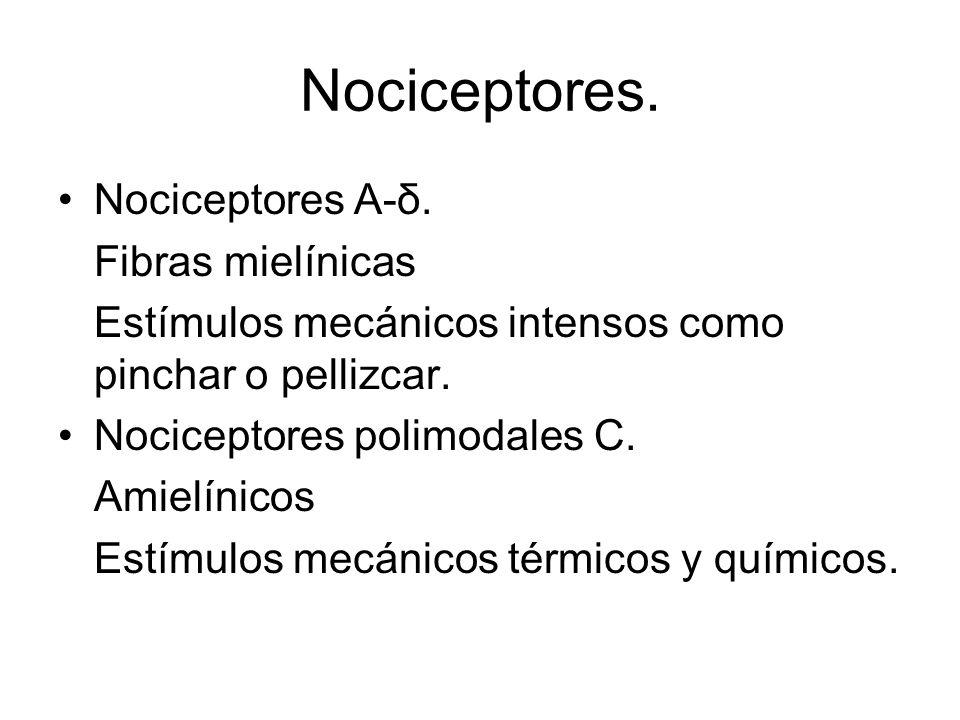 Nociceptores.Nociceptores A-δ.