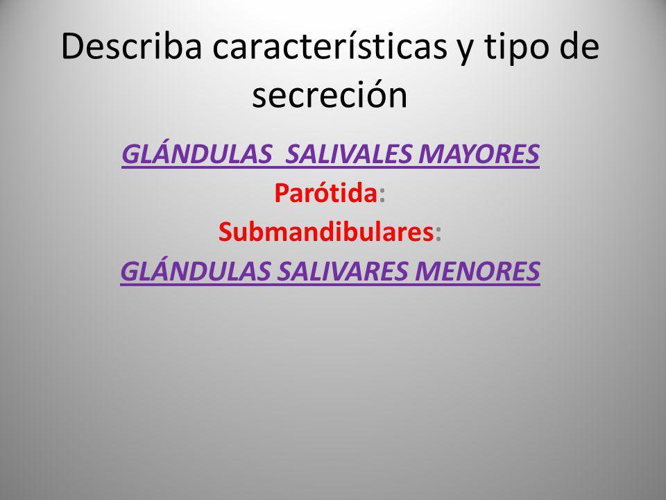 Describa características y tipo de secreción GLÁNDULAS SALIVALES MAYORES Parótida: Submandibulares: GLÁNDULAS SALIVARES MENORES
