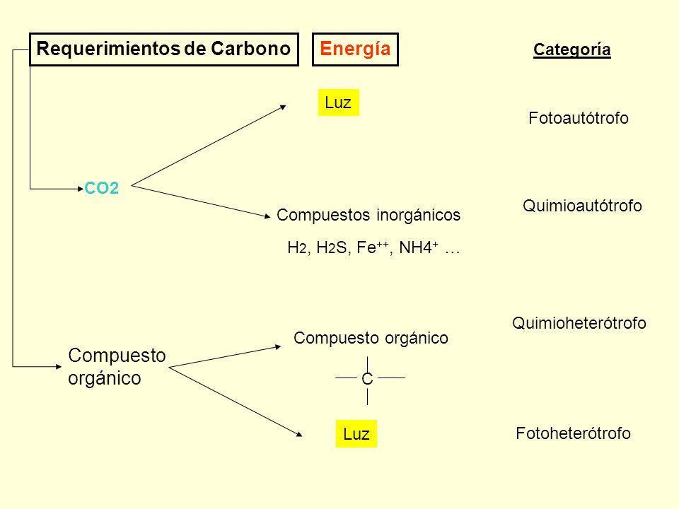 NUTRICIÓN MICROBIANA Hidrógeno, 8% Oxígeno, 20% Carbono, 50% Nitrógeno, 14% Fósforo, 3% Azufre, 1% K Na Mg Ca Fe *** Mn Co Cu Mo Zn 95% 5% Agua 80-90%