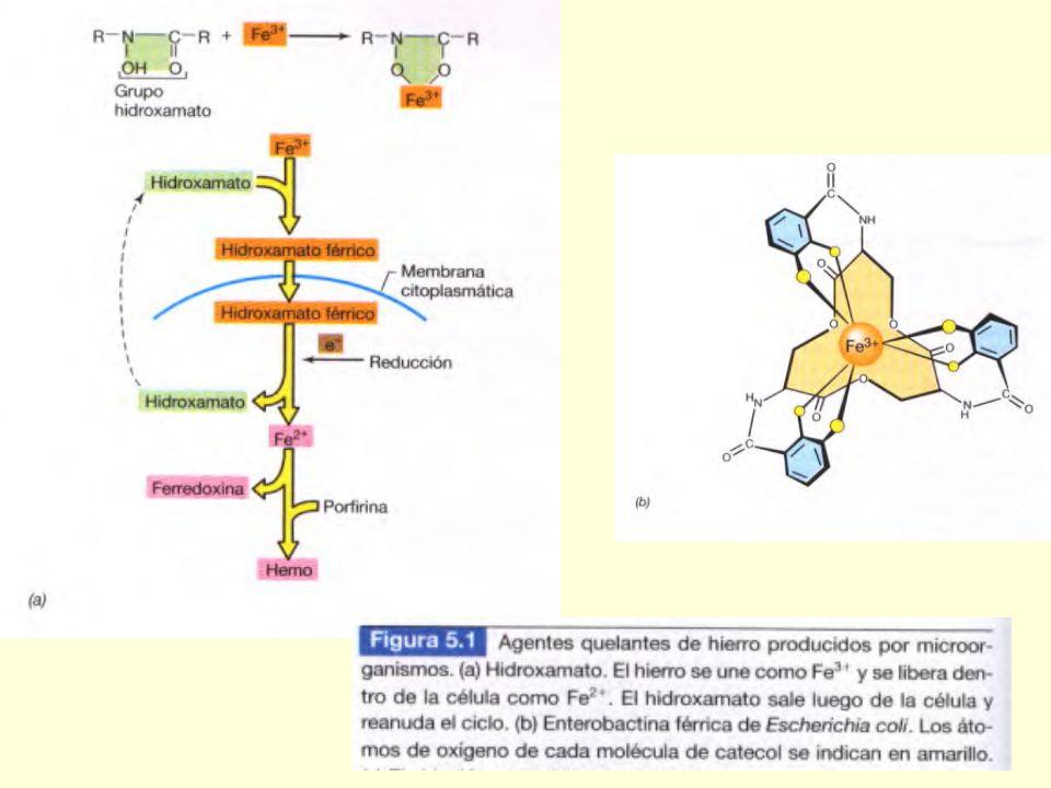 Requerimientos de N, S y P NO 3 - NH 4 +, N 2 SO 4 -2 Cys, Met PO4 -3 Requerimientos de K, Mg, Ca - Na Requerimiento de Fe ++ Sideróforos Micronutrien