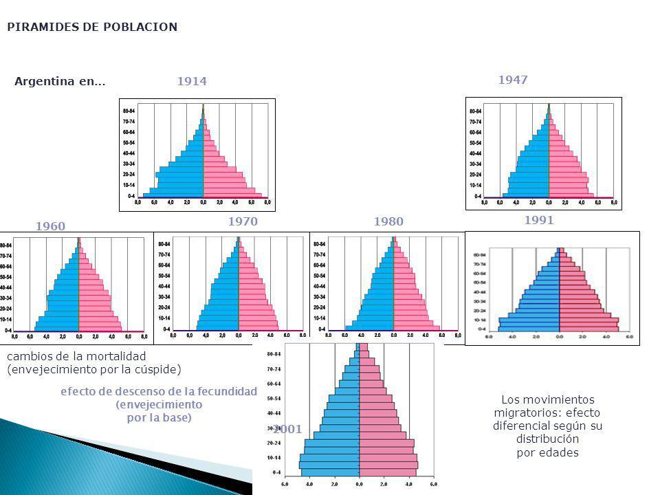 PIRAMIDES DE POBLACION Argentina en…1914 1947 1960 19701980 1991 2001 efecto de descenso de la fecundidad (envejecimiento por la base) cambios de la mortalidad (envejecimiento por la cúspide) Los movimientos migratorios: efecto diferencial según su distribución por edades