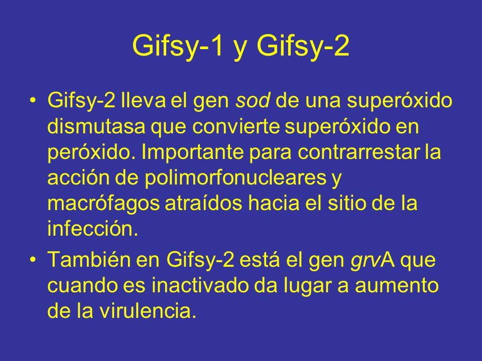 Gifsy-1 y Gifsy-2 Gifsy-2 lleva el gen sod de una superóxido dismutasa que convierte superóxido en peróxido.