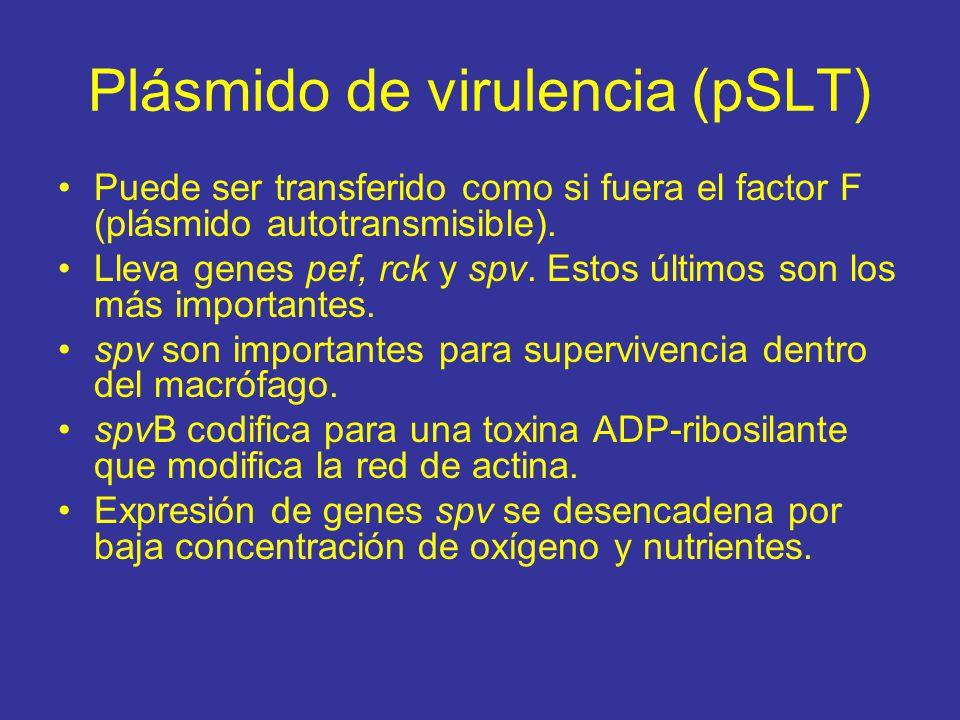 Plásmido de virulencia (pSLT) Puede ser transferido como si fuera el factor F (plásmido autotransmisible).