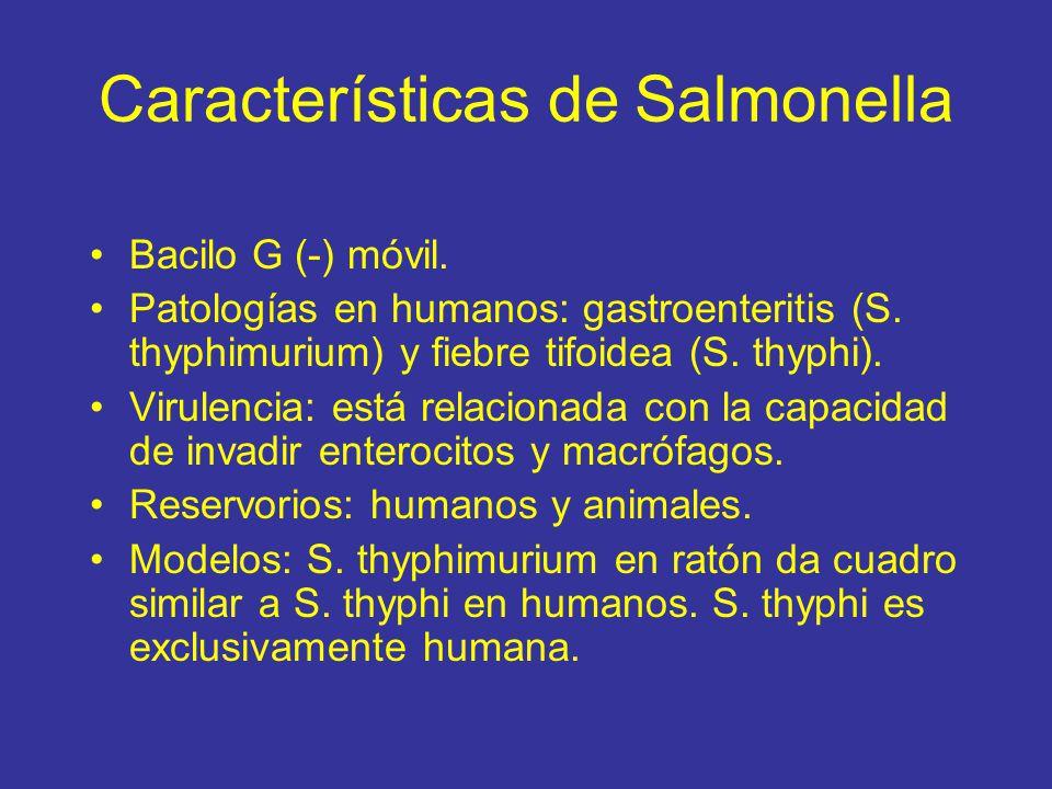 Características de Salmonella Bacilo G (-) móvil.Patologías en humanos: gastroenteritis (S.