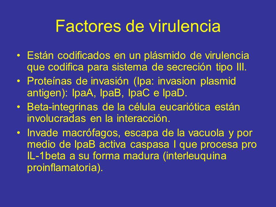Factores de virulencia Están codificados en un plásmido de virulencia que codifica para sistema de secreción tipo III.