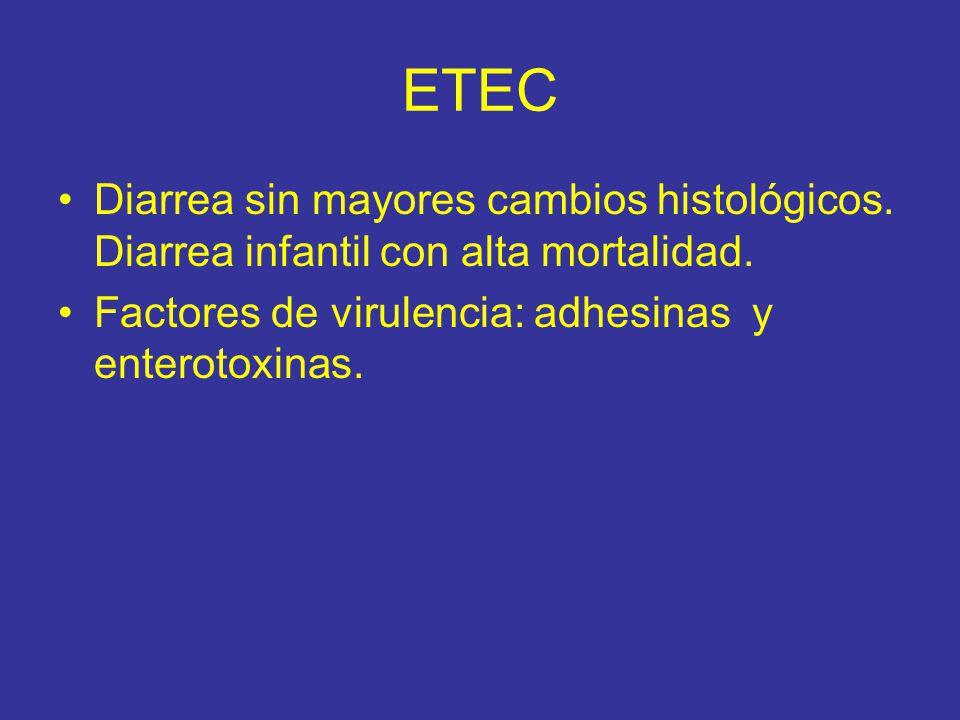 ETEC Diarrea sin mayores cambios histológicos.Diarrea infantil con alta mortalidad.