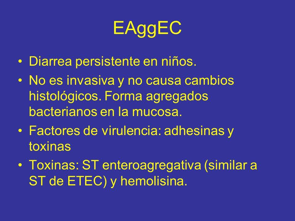 EAggEC Diarrea persistente en niños.No es invasiva y no causa cambios histológicos.