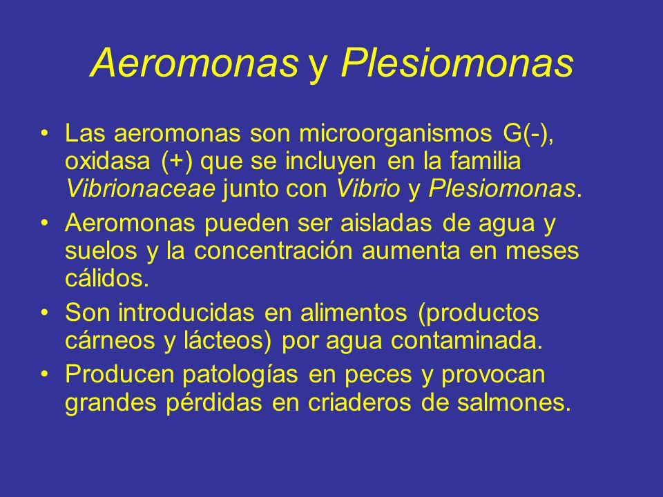 Aeromonas y Plesiomonas Las aeromonas son microorganismos G(-), oxidasa (+) que se incluyen en la familia Vibrionaceae junto con Vibrio y Plesiomonas.