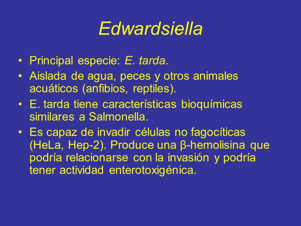 Edwardsiella Principal especie: E.tarda.