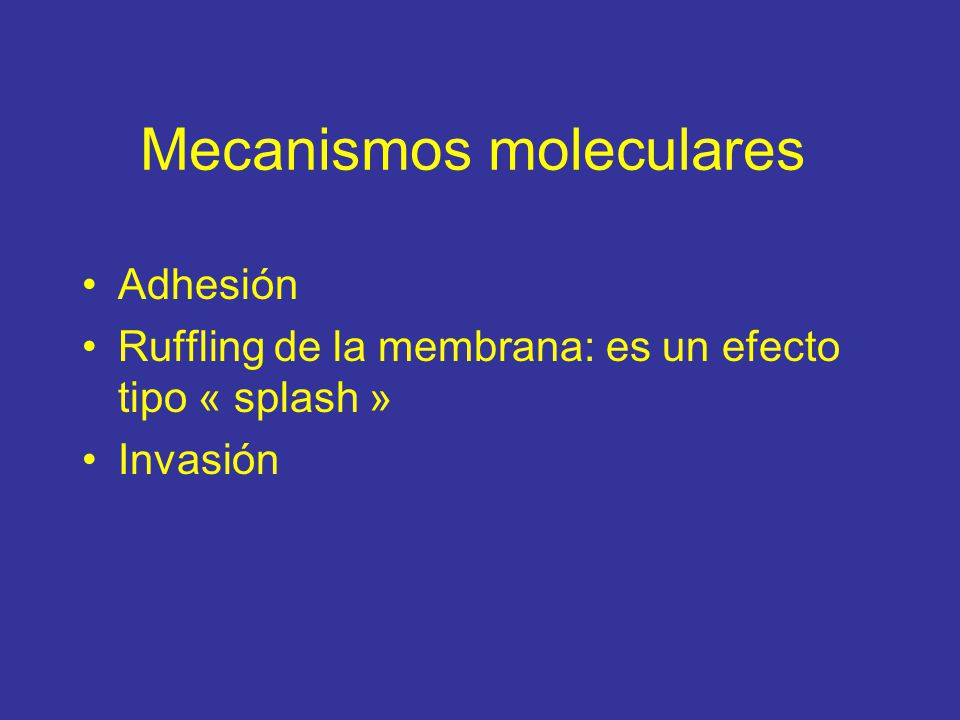 Mecanismos moleculares Adhesión Ruffling de la membrana: es un efecto tipo « splash » Invasión