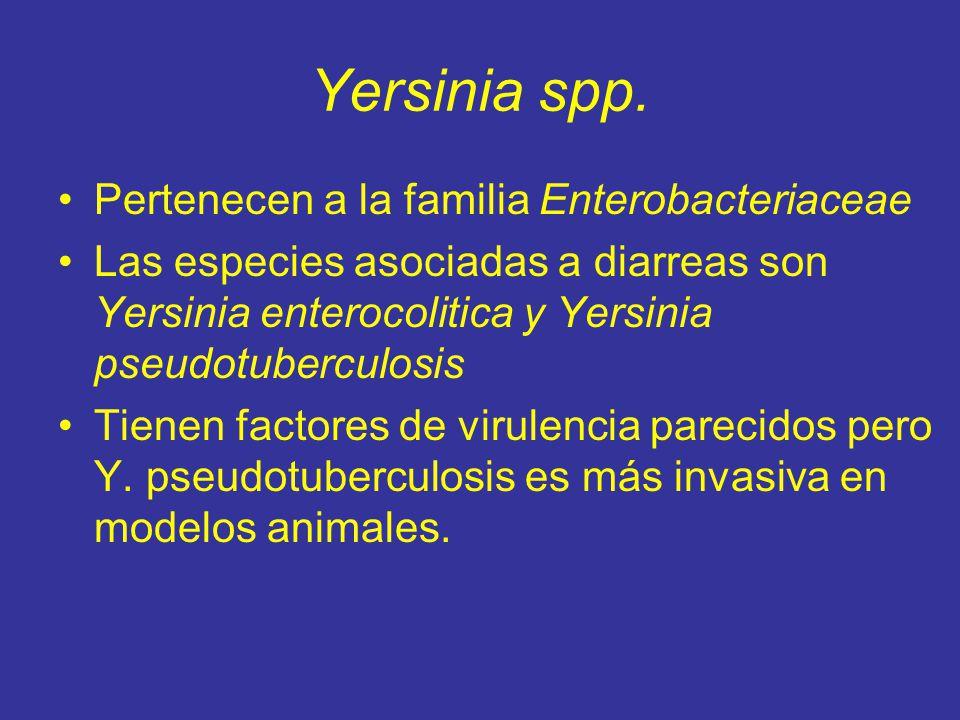 Yersinia spp.